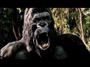 NEW KING KONG REVIEW COMING SOON!