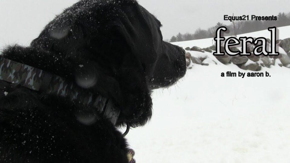 FERAL (Short Film by Aaron B.)